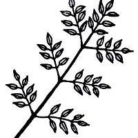 Albizia lebbeck (L )Benth  | Species | India Biodiversity Portal