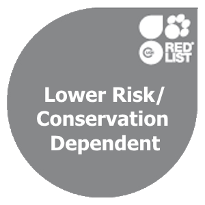 Lower Risk/Conservation Dependent