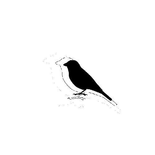 Sparrow±