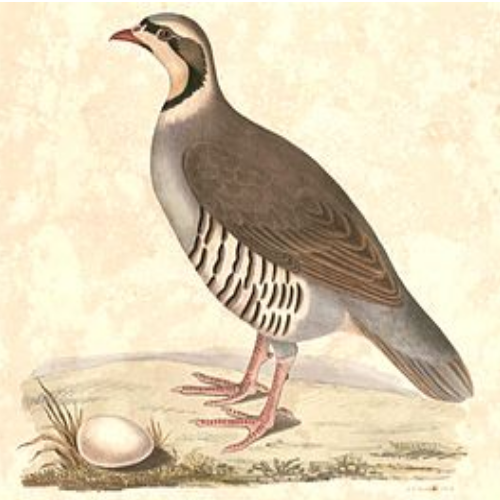 Partridges, pheasants, grouse