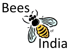 Bees of India