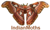 IndianMoths